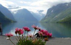 Норвегия: волшебная страна цветов?