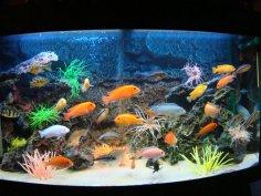 Как декорировать аквариум для рыбок?