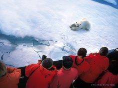 Как современному человеку покорить Северный полюс?