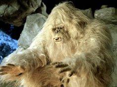 Телеканалу Animal Planet удалось записать крики неизвестного существа