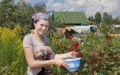 Что значит для русского человека дача?