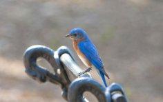 Как поймать синюю птицу удачи?
