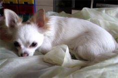 Почему собаки крутятся на месте перед тем, как лечь спать?