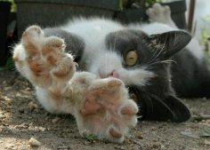 Как отучить кошку выпускать когти