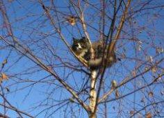 Для чего кошке дерево? О приметах и не только…
