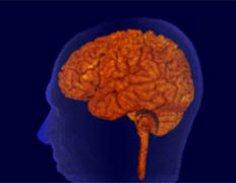 Как звучит работа нашего мозга?
