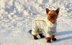 Как практично одеть собаку?