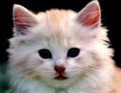 Как убедиться в том, что кошка здорова?