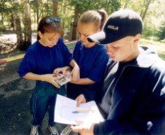 Что такое экологическая игра? Игры на лесной прогулке
