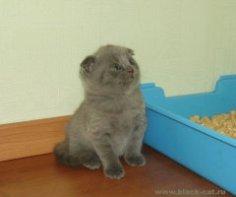 Что делать, если кошка игнорирует кошачий туалет?