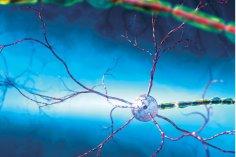Нервные клетки теперь стало можно восстановить