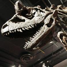 На клонировании динозавров поставили крест