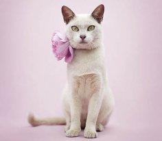 Трудности перевода: как кошки общаются с людьми