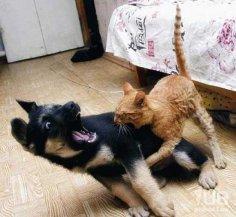 Почему кошки с собаками не дружат?