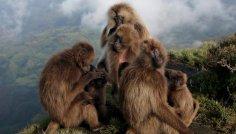 Что же на самом деле сделало обезьяну человеком?