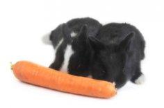 Морковь: какой овощ можно нести на плече как винтовку или зонтик?
