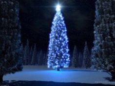 Что вы знаете о новогодней елке