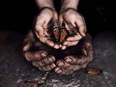 «Эффект бабочки» в нашей жизни