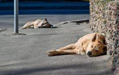 Как вы относитесь к бездомным собакам?