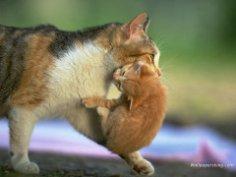 Как исправить поведение кошки?