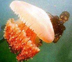 Что делать, если вас «обожгла» медуза?