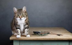 Чем кормить кота? Специальный корм или натуральная пища?