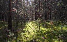 Возможно ли заблудиться в знакомом лесу?