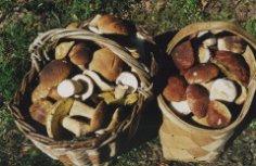 Зачем собирать грибы, или Некоторые секреты «тихой охоты»