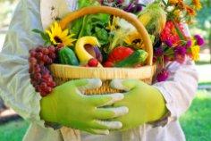 Что нужно успеть сделать дачнику в сентябре в саду, огороде и цветнике?
