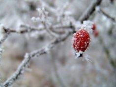 Что и как укрыть на зиму в саду?