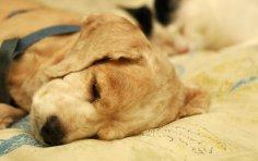 Видят ли животные сны?