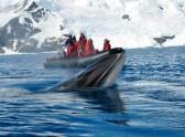 Тур в Антарктиду — мечта становится реальностью