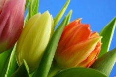 Какие цветы и какому знаку Зодиака преподнести? И о чем они расскажут...