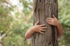 Вы - дерево. Какое именно, и как извлечь пользу из этого знания?