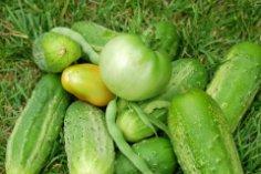 Что можно найти в капусте? Огурцы и помидоры!