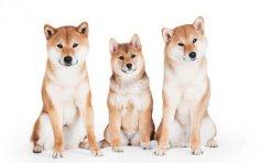 Криптовалюта догкоин (dogecoin). Как «собакоденьги» стали одной из самых популярных криптовалют?