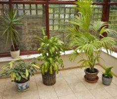 Комнатные растения: какая земля им «вкуснее»?