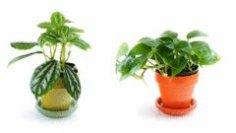 Комнатные растения: какой уход им необходим?