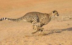 Знаете ли вы, что?.. Любопытные факты о рекордах в мире животных