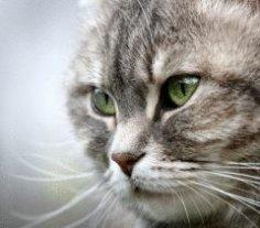 Для чего кошке ее усы?