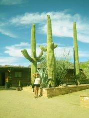 Почему кактус Сагуаро является символом штата Аризона?