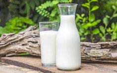 В чем польза молока для здоровья, красоты и приготовления пищи?