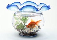 Где  расположить аквариум?