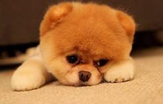 Собаки испытывают зависть