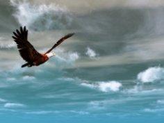 Как орел стал царской птицей? Символика образа