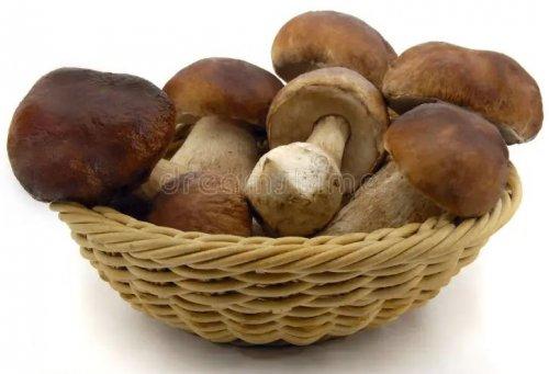 Грибы-грибочки. Что мы о них знаем?