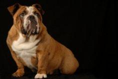 Собачья энциклопедия, или Что нужно знать о собаках?