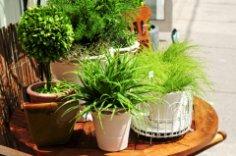 Как правильно озеленить дом?