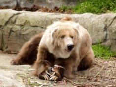 Кем медведь приходился древним людям? Символика образа