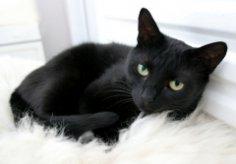 Как кошки пришли в наши дома?